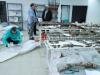 dnk-laboratorij-u-tuzli-identificirane-nove-c5bertve-genocida-nad-boc5a1njacima